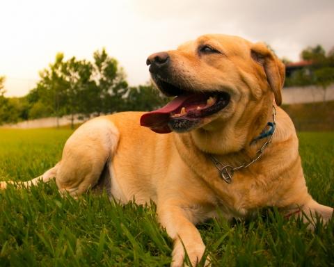 Els gossos no són un problema si els seus propietaris se'n fan càrrec / BSB