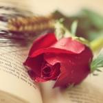 Rosa de Sant Jordi / ANNA - Flickr