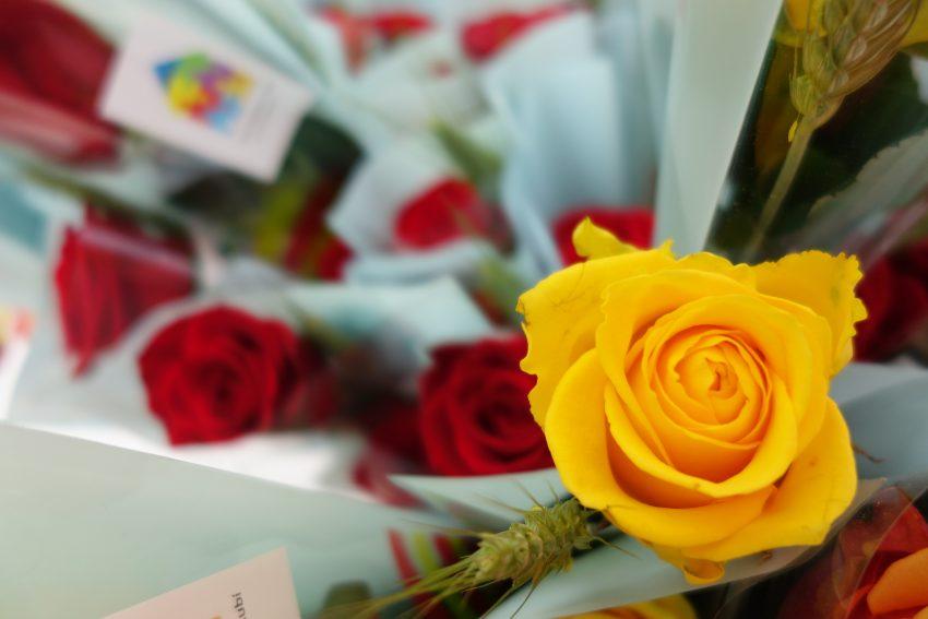 Les roses grogues, protagonistes alternatives de la Diada / DGM