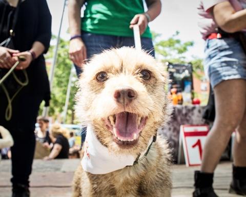 Festa dels animals / AJUNTAMENT DE BARCELONA