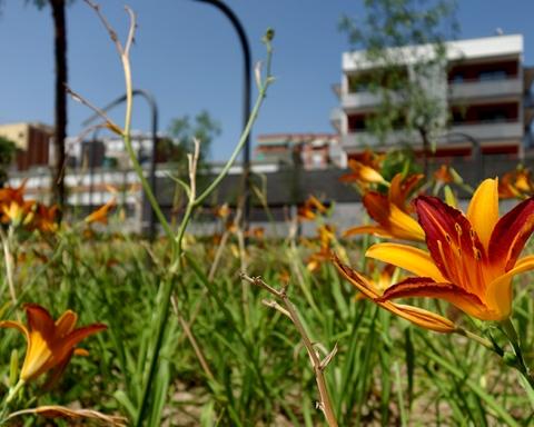 Zona verda Lanzarote / DGM