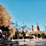 Els arbres dels Jardinets de Can Fabra ja han florit / DGM